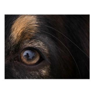 In His Eyes Postcard