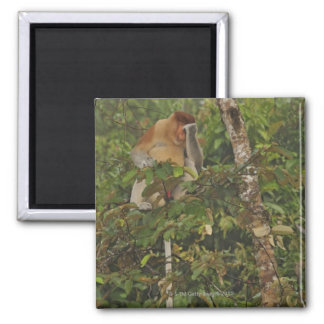 in rain forest, Borneo Island, Malaysia Magnet