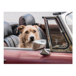 In The Driver's Seat - Sort of Postcard