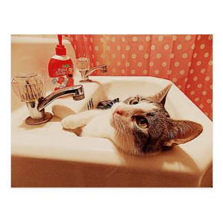 In the Sink Kitty Card Postcard