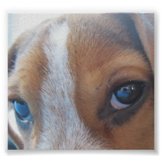 In they eyes of a puppy. poster
