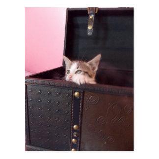 in trunk kitten postcard