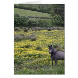 In Western Ireland,a horse stands in a bright Card