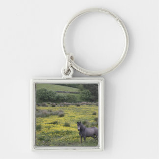 In Western Ireland,a horse stands in a bright Key Ring