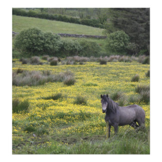 In Western Ireland,a horse stands in a bright Photo Print