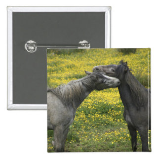 In Western Ireland,two horses nuzzle in a 15 Cm Square Badge