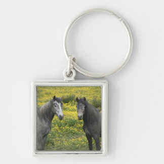 In Western Ireland, two horses with long Key Ring