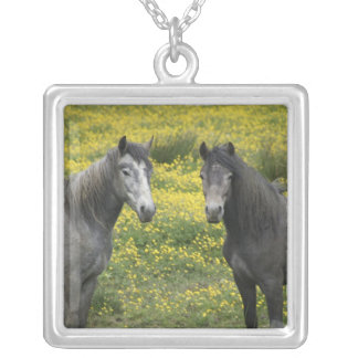 In Western Ireland, two horses with long Silver Plated Necklace