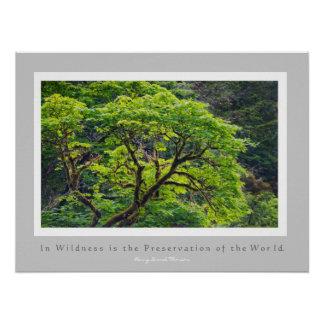 In Wildness is the Preservation of the World Print