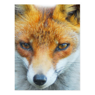 In your face vixen postcard