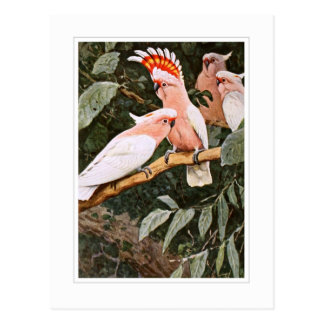Inca Cockatoo ; by W.Kuhnert Postcard