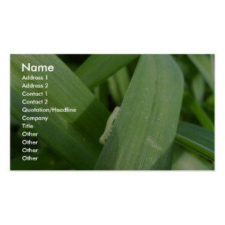 Inch Worm On The Green Leave Pack Of Standard Business Cards