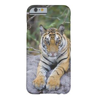 India, Bandhavgarh National Park, tiger cub Barely There iPhone 6 Case
