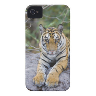 India, Bandhavgarh National Park, tiger cub Case-Mate iPhone 4 Case