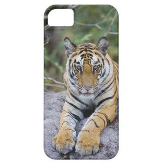 India, Bandhavgarh National Park, tiger cub iPhone 5 Case
