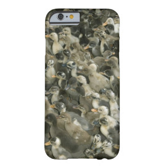 India Barely There iPhone 6 Case