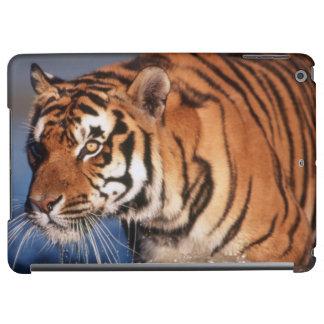India, Bengal Tiger (Panthera Tigris) 2