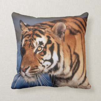 India, Bengal Tiger (Panthera Tigris) 2 Cushion