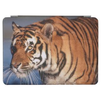 India, Bengal Tiger (Panthera Tigris) 2 iPad Air Cover
