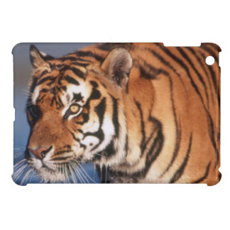 India, Bengal Tiger (Panthera Tigris) 2 iPad Mini Cases