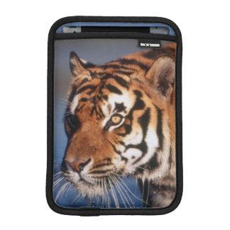 India, Bengal Tiger (Panthera Tigris) 2 iPad Mini Sleeve