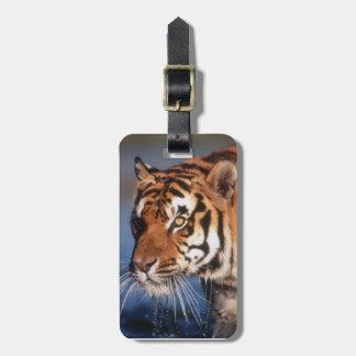 India, Bengal Tiger (Panthera Tigris) 2 Luggage Tag