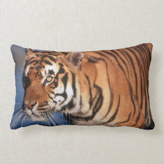 India, Bengal Tiger (Panthera Tigris) 2 Lumbar Cushion