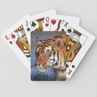 India, Bengal Tiger (Panthera Tigris) 2 Playing Cards