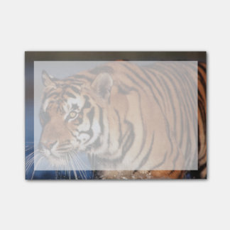 India, Bengal Tiger (Panthera Tigris) 2 Post-it Notes