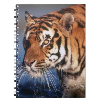 India, Bengal Tiger (Panthera Tigris) 2 Spiral Notebook