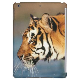 India, Bengal Tiger (Panthera Tigris) 4