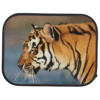 India, Bengal Tiger (Panthera Tigris) 4 Car Mat