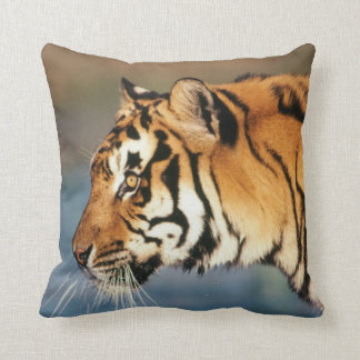 India, Bengal Tiger (Panthera Tigris) 4 Cushion