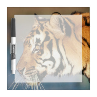 India, Bengal Tiger (Panthera Tigris) 4 Dry Erase Board
