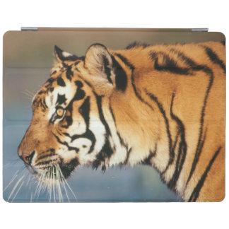 India, Bengal Tiger (Panthera Tigris) 4 iPad Cover