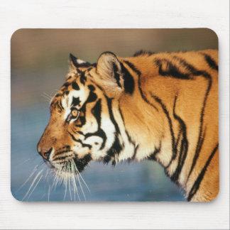 India, Bengal Tiger (Panthera Tigris) 4 Mouse Mat