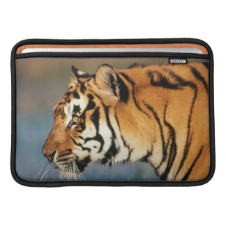 India, Bengal Tiger (Panthera Tigris) 4 Sleeve For MacBook Air