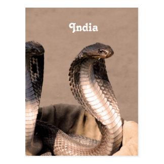 India Cobra Postcard