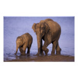 India, Nagarhole National Park. Asian elephant