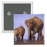 India, Nagarhole National Park. Asian elephant 15 Cm Square Badge