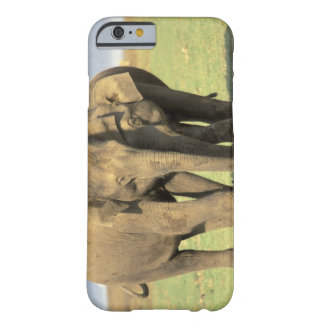 India, Nagarhole National Park. Asian elephant Barely There iPhone 6 Case