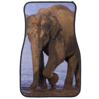 India, Nagarhole National Park. Asian elephant Car Mat