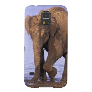India, Nagarhole National Park. Asian elephant Galaxy S5 Cases