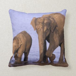 India, Nagarhole National Park. Asian elephant Cushion