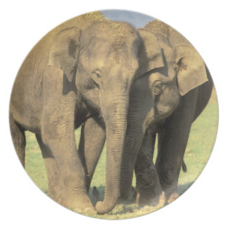 India, Nagarhole National Park. Asian elephant Dinner Plates