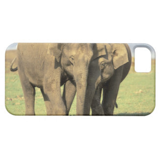 India, Nagarhole National Park. Asian elephant iPhone 5 Covers