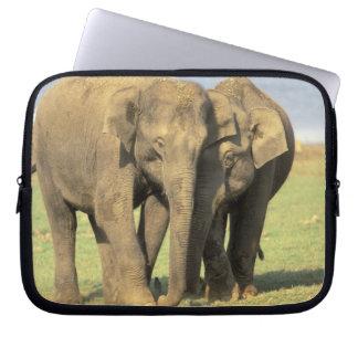 India, Nagarhole National Park. Asian elephant Laptop Sleeve