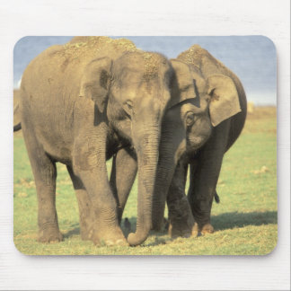India, Nagarhole National Park. Asian elephant Mouse Mat