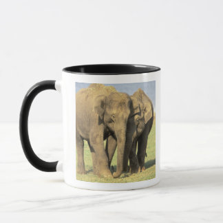 India, Nagarhole National Park. Asian elephant Mug