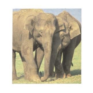 India, Nagarhole National Park. Asian elephant Notepad